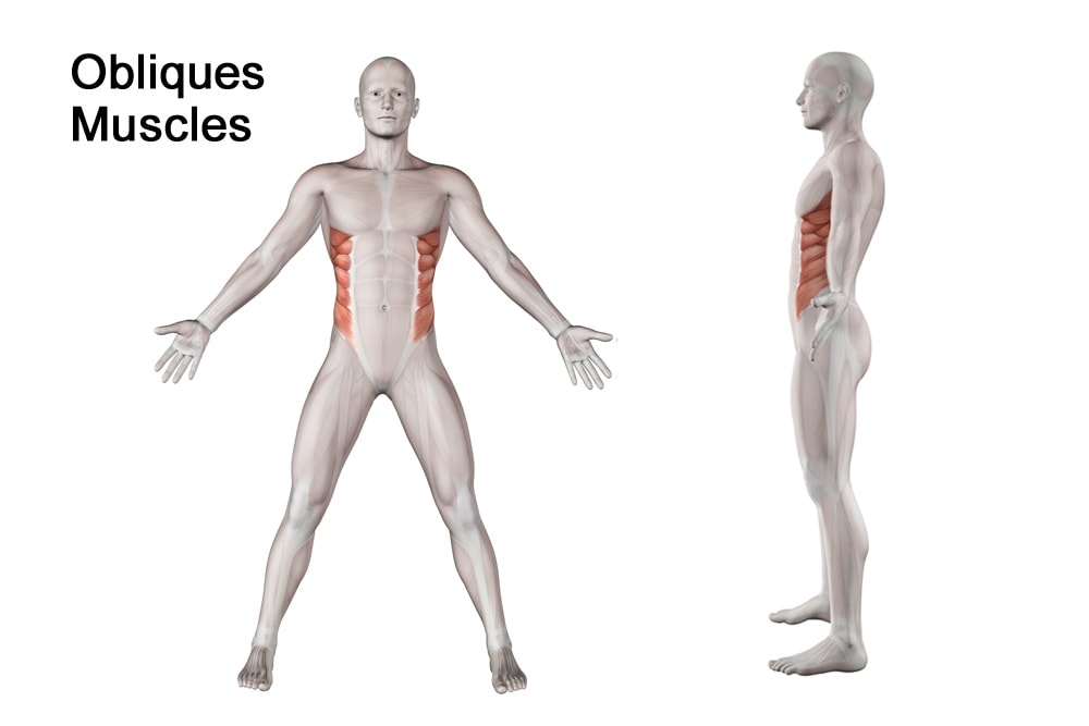 what are obliques muscles